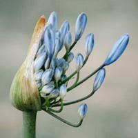 Modul 2: Fresh Date , Foto einer blauen Blüte